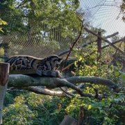 Panthère zoo de Mulhouse au séminaire 2019
