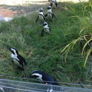 Pingouins zoo de Mulhouse au séminaire 2019