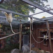 Singes zoo de Mulhouse au séminaire 2019